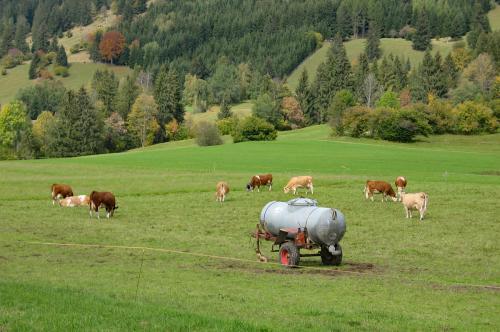 Wiesen mit Kühen rund um den Hof